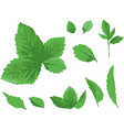 green leaves isolated elements on white background vector image vector image