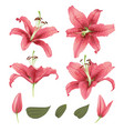 realistic lily flower blossom set vector image vector image