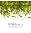 cover green leaves on a white background vector image vector image