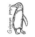 galapagos penguin vector image