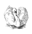 Hand sketch floating swans vector image vector image