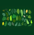 summer season exotic leaves collection vector image