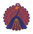 a peacock vector image vector image