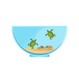 bowl terrarium with little swimming turtles vector image
