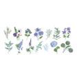 bundle of detailed drawings of beautiful floristic vector image vector image