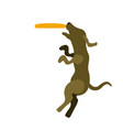 dog playing with a frisbee icon vector image
