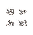 Logo of birds icon line art gray color