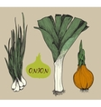 Onion Set f vector image vector image