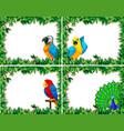 set of bird frame vector image vector image