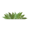 fern leaf background with white fram vector image vector image
