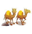 two camels vector image vector image