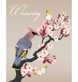 Waxwing on the cherry branch vector image vector image