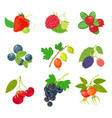 berries isolated set icon on white background vector image vector image