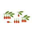 goji berries vector image