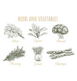herbs and vegetables sketch collection vector image vector image