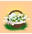 Spring bouquet of snowdrop vector image