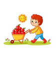 the boy rolls a wheelbarrow with apples vector image vector image