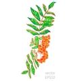 bush rowan vector image vector image