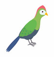 green turaco bird isolated on vector image vector image