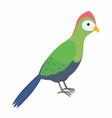 green turaco bird isolated vector image vector image