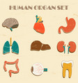 internal organs set vector image vector image