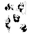 pandas in different positions vector image vector image