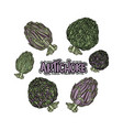 set with artichoke vector image vector image