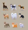 set nine different dog breeds vector image vector image