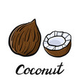 drawing coconut vector image vector image