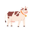 funny spotty cow with bell on neck farm milk vector image vector image