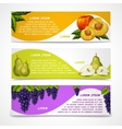 Mixed fruits banners collection vector image vector image