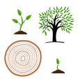 set stages of tree growth from the germ to the vector image vector image