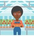 Farmer collecting tomatos vector image vector image