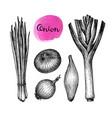 onions leeks and scallions vector image