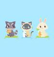 cute baanimals baraccoon kitten bunny vector image