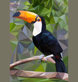 toucan low poly vector image vector image