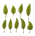 set of green leaves on a white background vector image vector image
