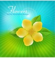 background with flowers vector image vector image