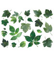 decorative leaves silhouettes vector image