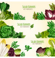 salads or leafy vegetables banners set vector image vector image
