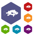 sea bass fish icons set hexagon vector image vector image