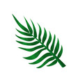 green areca palm leaf vector image vector image