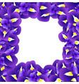 purple iris flower border vector image vector image