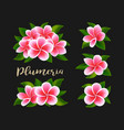 realistic white pink plumeria frangipani flowers vector image vector image
