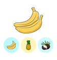 Fruit Icons Banana Pineapple Coconut vector image vector image
