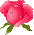 fresh rose vector image vector image