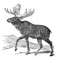 Moose vintage engraving vector image vector image
