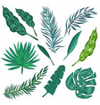 tropical palm leaves and jungle leaves vector image
