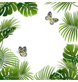 banner tropical plants and butterflies vector image vector image