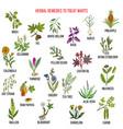 best herbal remedies to treat warts vector image vector image